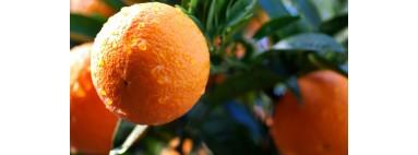 Naranjas húmedas